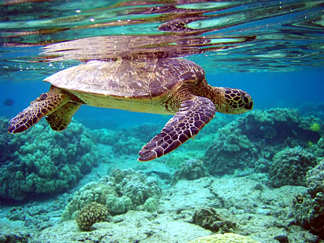 Welcome Sea Turtles by Cedar Cove Resorts and Cottges, an Anna Maria Vacation Destination